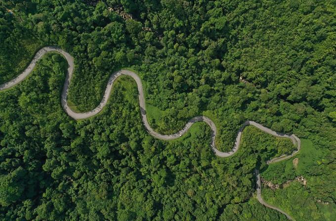 Serpentinen im Regenwald